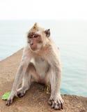 Lustiger Affe, der eine Banane isst Lizenzfreies Stockfoto