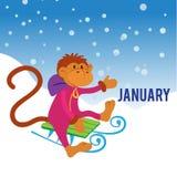 Lustiger Affe, der im Schnee rodelt Lizenzfreies Stockfoto