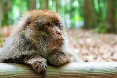 Lustiger Affe, der im tropischen Wald sitzt Stockfoto
