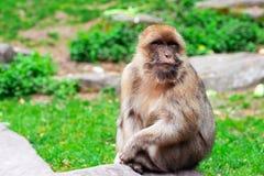 Lustiger Affe, der im tropischen Wald sitzt Lizenzfreie Stockbilder