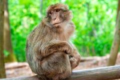Lustiger Affe, der im tropischen Wald sitzt Lizenzfreies Stockfoto