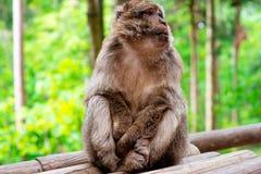 Lustiger Affe, der im tropischen Wald sitzt Stockfotos