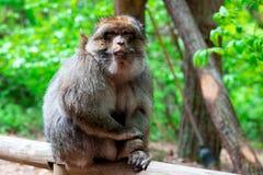 Lustiger Affe, der im tropischen Wald sitzt Stockfotografie