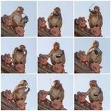 Lustiger Affe, der Sonnenbrille hält Lizenzfreies Stockbild