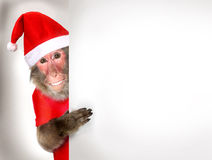Lustiger Affe Santa Claus, die Weihnachtsfahne hält Lizenzfreie Stockfotografie