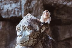 Lustiger Affe sitzt auf Affemonument Lizenzfreie Stockbilder