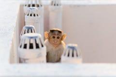 Lustiger Affe sitzt auf dem Dach nahe Belüftungsrohr Lizenzfreie Stockfotografie