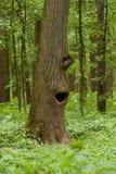 Lustiger Baum Stockfoto