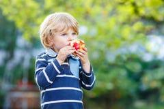 Lustiger blonder Kinderjunge, der gesunden Apfel isst Stockfoto