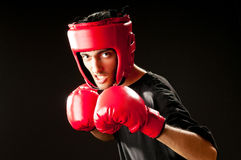 Lustiger Boxer getrennt Lizenzfreie Stockfotos
