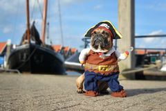 Lustiger brauner Hund der französischen Bulldogge oben gekleidet im Piratenkostüm mit Hut- und Hakenarmstellung am Hafen mit Boot stockfotografie