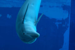 Lustiger Delphin Lizenzfreie Stockfotografie