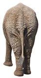 Lustiger Elefant-Kolben, hinteres Ende, Rückseite, getrennt lizenzfreie stockfotografie