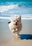 Lustiger epischer Hund Stockfotos