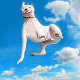 Lustiger fallender Hund Stockfoto