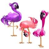 Lustiger Flamingo drei lokalisiert auf weißem Hintergrund Vektorkarikatur-Nahaufnahmeillustration Stock Abbildung
