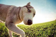 Lustiger Hund Stockfoto