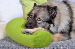 Lustiger Hund Lizenzfreies Stockfoto