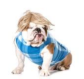 Lustiger Hund Stockfotos
