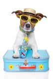 Lustiger Hund als Tourist Stockfotografie