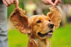 lustiger Hund auf dem grünen Gras Stockfotografie