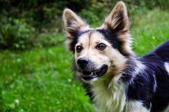 Lustiger Hund auf einem Weg fängt Stockfotos