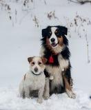 Lustiger Hund, der im Schnee spielt Stockbilder