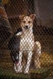 Lustiger Hund in einem Käfig Tierheim Der Hund wartet auf seinen Eigentümer Ein Hund ist ein Mann ` s Freund Lizenzfreies Stockbild