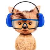 Lustiger Hund im Kopfhörer lokalisiert auf Weiß Lizenzfreie Stockfotografie