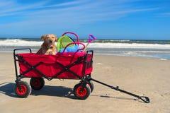 Lustiger Hund im Urlaub Lizenzfreies Stockfoto