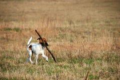 Lustiger Hund mit Steuerknüppel Lizenzfreies Stockfoto