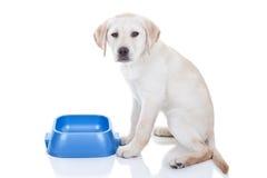 Lustiger hungriger Hund Lizenzfreie Stockfotografie