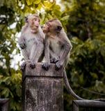 Lustiger junger Affe, der auf Wand klettert Stockfotografie