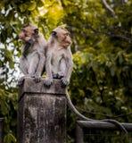 Lustiger junger Affe, der auf Wand klettert Lizenzfreie Stockfotos