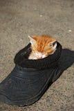 Lustiger Katzenschlaf im alten Schuh Stockfotos