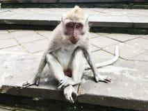 Lustiger kleiner Affe im Park im Sommer Stockfotografie