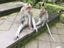 Lustiger kleiner Affe im Park im Sommer Lizenzfreie Stockbilder