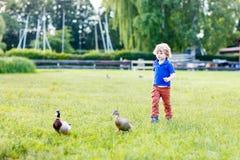 Lustiger Kleinkindjunge, der Wildenten in einem Park jagt Stockfotos