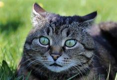 Lustiger merkwürdiger Blick einer Katze Lizenzfreie Stockfotos