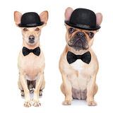 Lustiger Retro- Hund Lizenzfreies Stockfoto