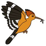 Lustiger Satz Mutter Hoopoe hält einen Wurm in ihrem Schnabel stock abbildung
