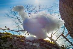 lustiger Schneemannvogel in den Strahlen der Sonne Stockfotos