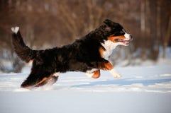 Lustiger schwarzer Hund, der in den Schnee springt Lizenzfreie Stockfotos