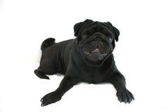 Lustiger spielerischer Hund Lizenzfreies Stockfoto