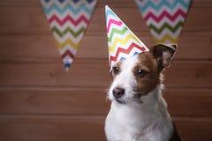Lustiger Steckfassungsrussell-Hund mit sommerlicher Kappe auf dem Kopf lizenzfreies stockbild