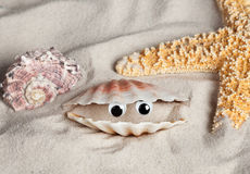 Lustiger Strand Seashell Stockfoto