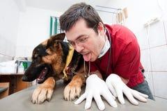 Lustiger Tierarzt mit Hund Stockbilder