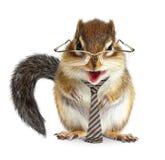Lustiger Tiergeschäftsmann, Streifenhörnchen mit Bindung und Gläser stockbild