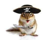 Lustiger Tierpirat, Eichhörnchen mit Hut und Säbel Stockfotografie