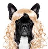 Lustiger verrückter dummer Karnevalshund Lizenzfreie Stockfotografie